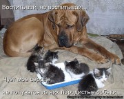 http://thumbnails18.imagebam.com/10262/ea461a102617451.jpg