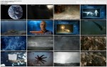 Zwierzêcy Armagedon / Animal Armageddon (2009) PL.TVRip.XviD / Lektor PL